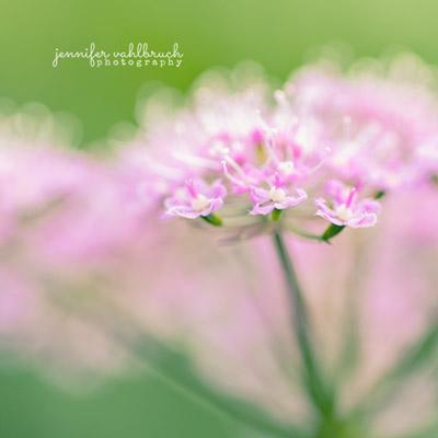 Flowers Fine Art Photography Prints - Jennifer Vahlbruch
