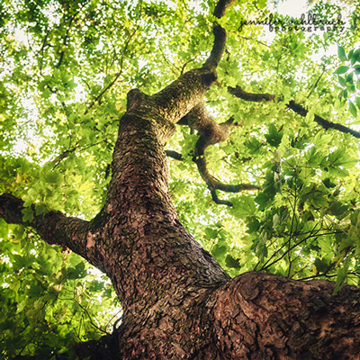 Forest Fine Art Photography Prints - Jennifer Vahlbruch