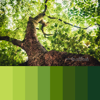 Green Fine Art Photography Prints - Jennifer Vahlbruch