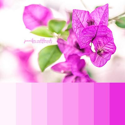 Pink Fine Art Photography Prints - Jennifer Vahlbruch